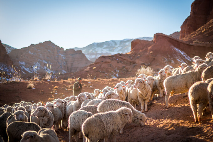 "Sheep, Shepherds and ""The Others"""